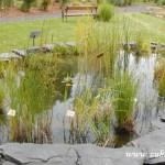 Kouzelný svět trav  20130032