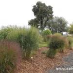 Kouzelný svět trav  20130042