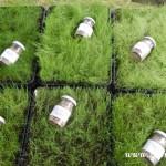 Kouzelný svět trav  20130053