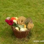 Kouzelný svět trav  20130059