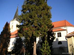 Kostel Zubří - Blažena Slováková