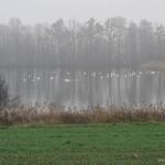 Pohled na rybník od  - Jiří Koleček