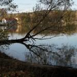 Strom u rybníku  - Blažena Slováková