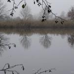 Zrcadlo pro stromy na hrázi - Jiří Koleček
