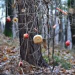 Stromeček pro zvířátka 2013 00038