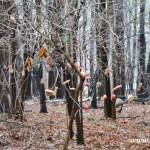 Stromeček pro zvířátka 2013 00058