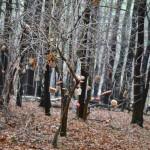 Stromeček pro zvířátka 2013 00065