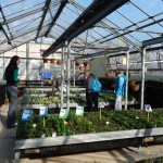 Oseva zahradkářství ve  skleníku  2014  0004