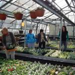 Oseva zahradkářství ve  skleníku  2014  0006