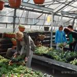 Oseva zahradkářství ve  skleníku  2014  0008