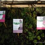 Oseva zahradkářství ve  skleníku  2014  0010