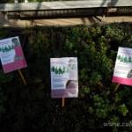 Oseva zahradkářství ve  skleníku  2014  0012