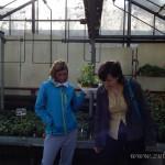 Oseva zahradkářství ve  skleníku  2014  0015