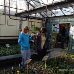 Oseva zahradkářství ve  skleníku  2014  0016