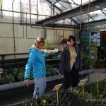 Oseva zahradkářství ve  skleníku  2014  0017