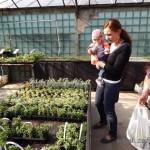 Oseva zahradkářství ve  skleníku  2014  0042