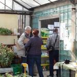 Oseva zahradkářství ve  skleníku  2014  0045