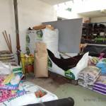 Oseva zahradkářství ve  skleníku  2014  0052