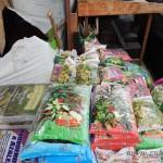 Oseva zahradkářství ve  skleníku  2014  0054