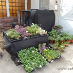 Oseva zahradkářství ve  skleníku  2014  0069