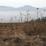 Pohled z Hájů na Staré Zubří pod mlhou