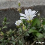 Bílý květ u cesty