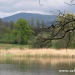 Kamenárka za Hamerským rybníkem