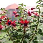 Květy v okně