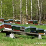 Pokusný včelín