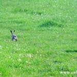 Zajíc na útěku