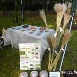 Kouzelný svět trav III v Osevě Zubří 2014DSCN3808