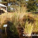 Kouzelný svět trav III v Osevě Zubří 2014DSCN3816