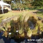 Kouzelný svět trav III v Osevě Zubří 2014DSCN3817