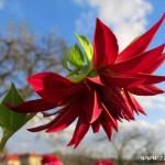 Podzimní květy v  Zubří 2014 0002