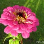Podzimní květy v  Zubří 2014 0005