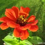 Podzimní květy v  Zubří 2014 0006
