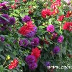 Podzimní květy v  Zubří 2014 0007