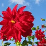 Podzimní květy v  Zubří 2014 0008