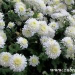 Podzimní květy v  Zubří 2014 0013