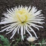 Podzimní květy v  Zubří 2014 0014