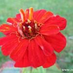 Podzimní květy v  Zubří 2014 0018