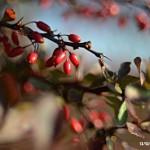 Podzimní květy v  Zubří 2014 J. Kolečková 0019