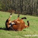 Kůň na Machulkách v netypické poloze