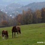 Podzim 2014 v Zubří  0035