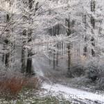 Cesta pod Kamenárkou