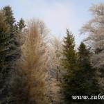 Koruny lesních stromů