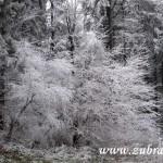 Namrzlé stromy na Hodorfu