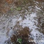 Zamrzlá tůň pod Kamenárkou