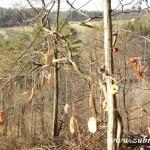 Zdobení stromečku v lipůvce 2014 0033