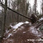 Cesta nad Starozuberským potokem